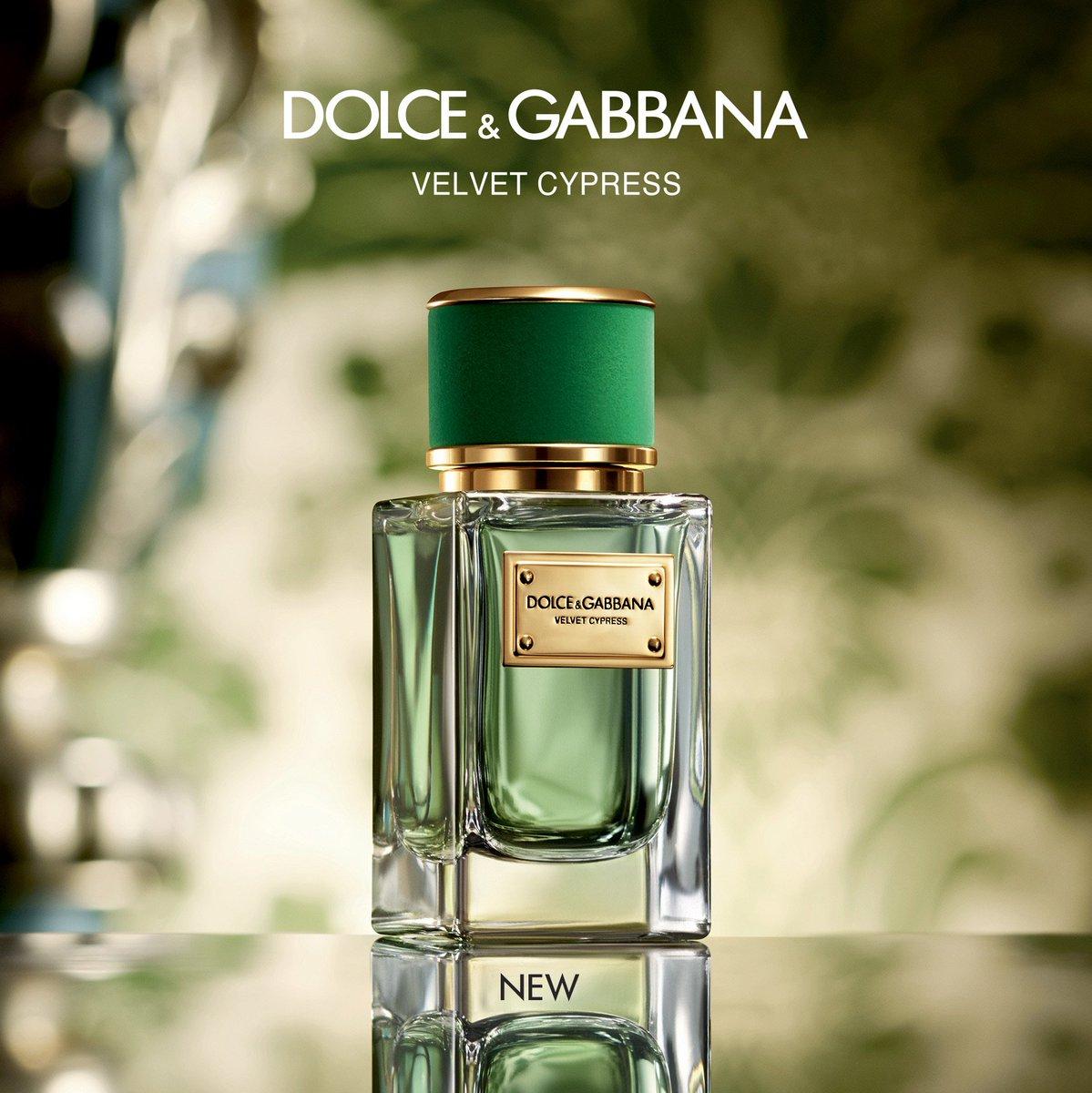 Velvet Cypress một sản phẩm nổi bật của D & G