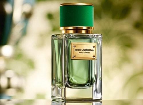 Nước hoa lưu hương lâu nhất -D&G Velvet Cypress